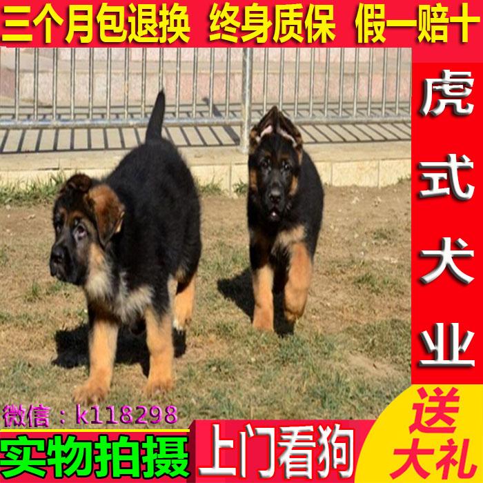 小型沙皮狗_我家养的沙皮犬想换一只小型宠什么品种都可