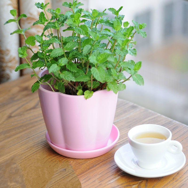 - Herbs that can be grown indoors ...