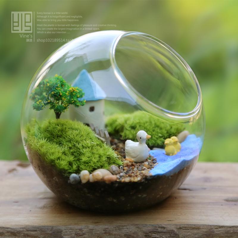 ȋ�藓生态瓶 ȋ�藓瓶 ɝ�苔苔藓 ȋ�藓微景观植物 ĸ�午,发现喜欢