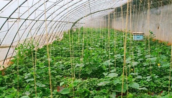 丁丁草莓园