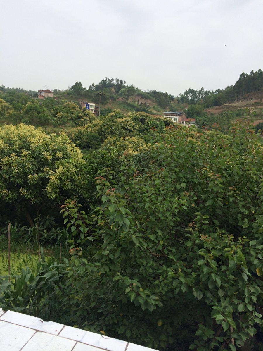 老君山风景名胜区