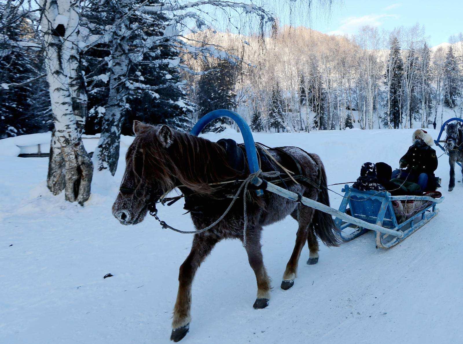 禾木马拉雪橇登观景平台