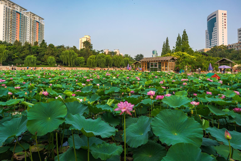 紫荆山公园