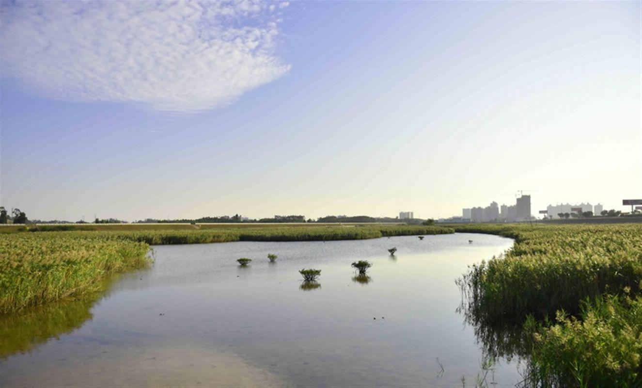 防城港湿地公园
