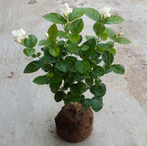 Комнатные растения Артикул 587825323413
