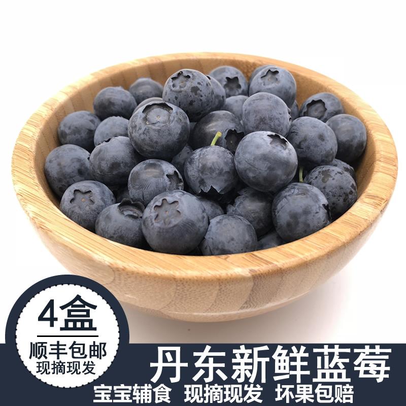 丹东新鲜国产蓝莓鲜果现摘现发孕妇水果现货顺丰空运包邮125g4盒