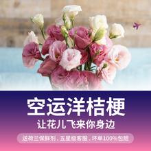 【花年】多色洋桔梗鲜花速递空运到家