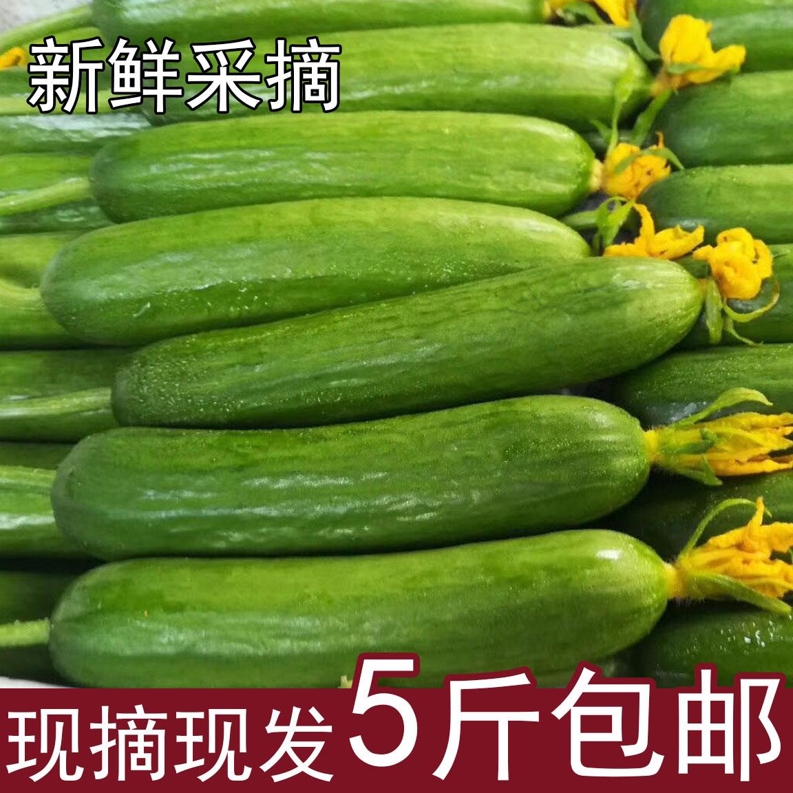 荷兰水果黄瓜新鲜蔬菜农家自种小黄瓜天然无农药现摘现发5斤包邮