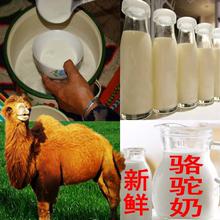 1000g 2斤骆驼奶新疆原奶无糖骆驼鲜奶骆驼纯奶产地直供 顺丰空运