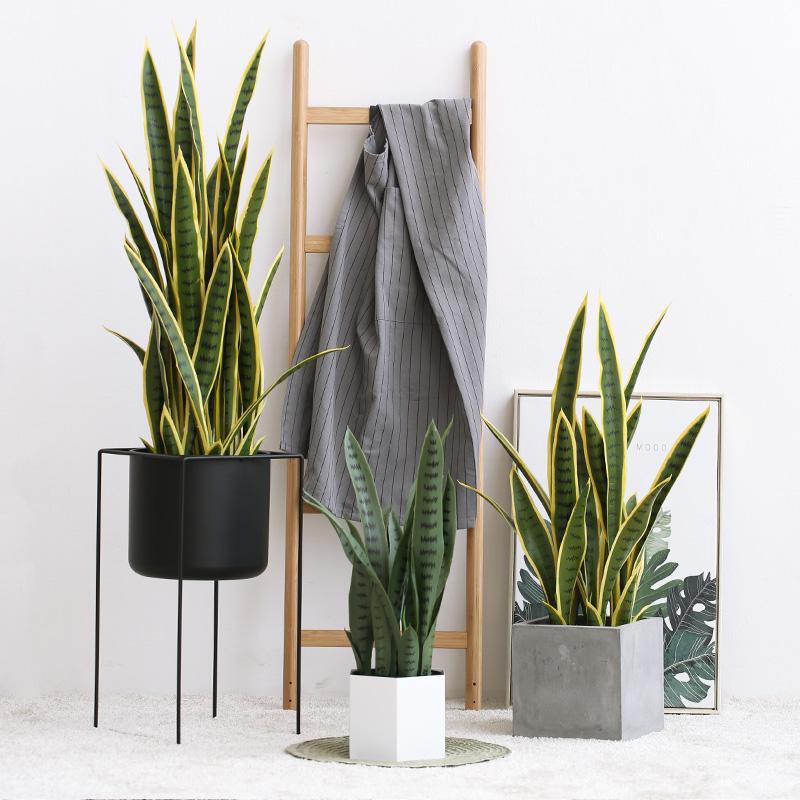 仿真植物虎皮兰落地植物家居装饰橱窗摆件落地盆栽 罗曼妈妈