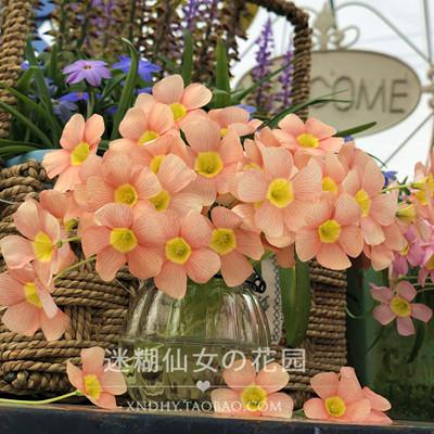 秋天种植 小仙女推荐 obtusa【orange dream 橙梦】酢浆草