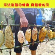 云南小挂蜜 蜂巢蜜野生嚼着吃 百花春蜂蜜农家自产土含花粉500g