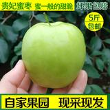 现摘台湾贵妃蜜枣子脆甜大青枣水果牛奶枣红冬枣 新鲜5斤礼盒包邮