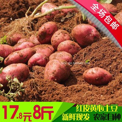 云南新鲜农家自种土豆 马铃薯 洋芋 现挖红皮黄心土豆老品种8斤