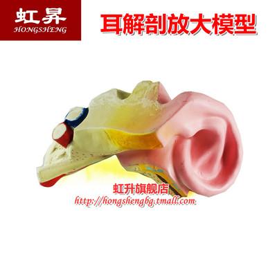 耳解剖放大模型 J3310人体听觉器官大体构造外中内耳迷路教学仪器