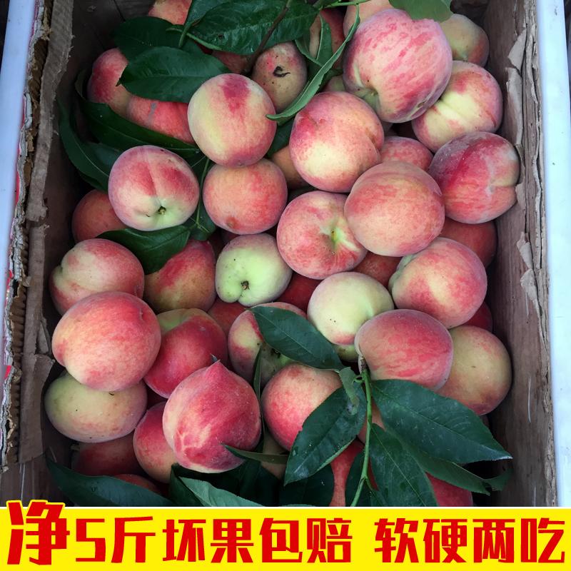 净重5斤陕西香甜水蜜桃毛桃子当季水果新鲜包邮 非脆硬黄血油蟠10