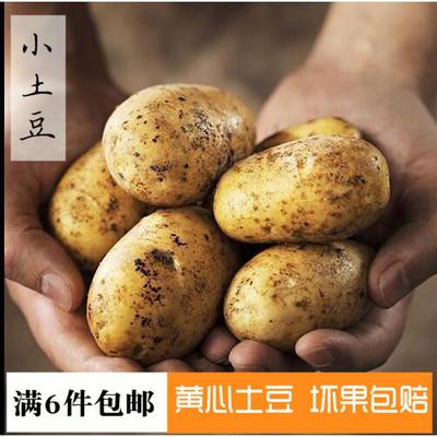 五谷杂粮宣威产农家自种新鲜现挖迷你土豆马铃薯洋芋新鲜蔬菜500g