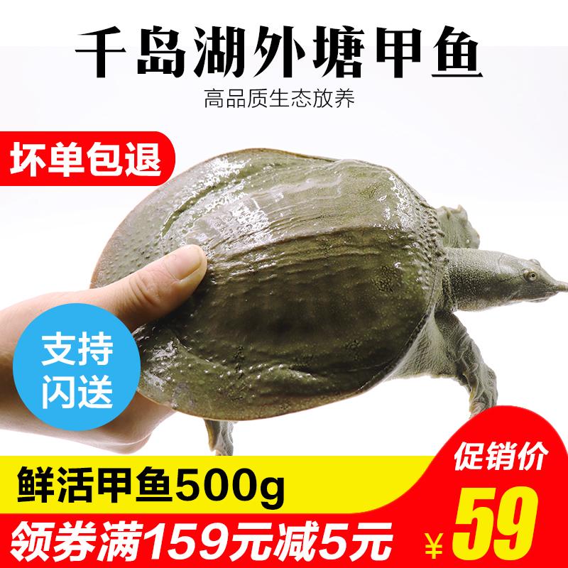 甲鱼活体外塘生态放养3年老鳖王八团鱼500g/只鲜活水鱼团包邮