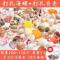 Natural shell conch fish tank ornament hermit crab shellfish small starfish creative drift bottle glass bottle material