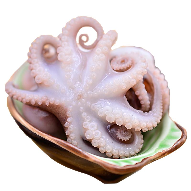 新鲜鱿鱼迷你八爪鱼短腿鲜活章鱼海鲜火锅食材快手海兔500g