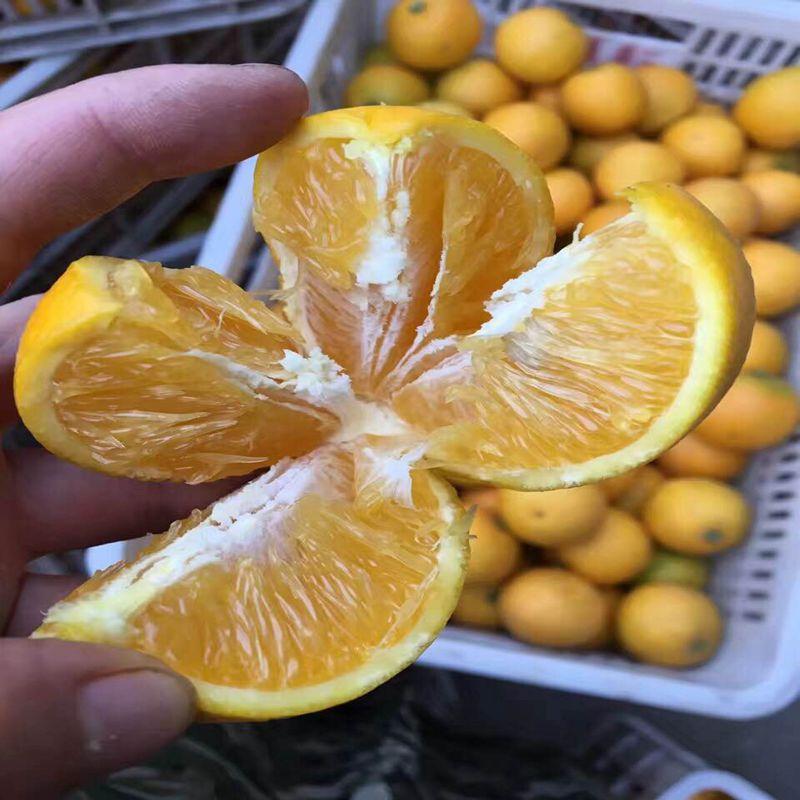 正宗麻阳苗乡冰糖橙10斤中果包邮农家新鲜水果非永兴橙子赣南脐橙