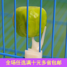 BD Bird Fruit Fork Parrot and Other Bird Cages Pet Bird Supplies Wholesale Special
