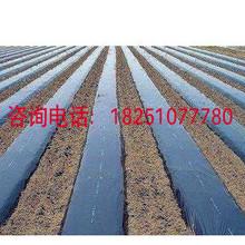 黑色地膜1米1.5米2米宽除草专用黑地膜 全新料加厚农用塑料黑薄膜