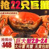 六月黄大闸蟹螃蟹特大公母蟹 螃蟹大闸蟹螃蟹鲜活 礼盒装 22只