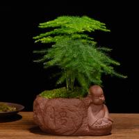 文竹盆栽栀子花发财树富贵竹绿萝绿植客厅办公室内花卉植物小盆景