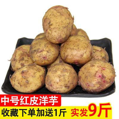 农家土豆自种新鲜黄心小土豆8斤装 马铃薯洋芋 云南现挖现发蔬菜