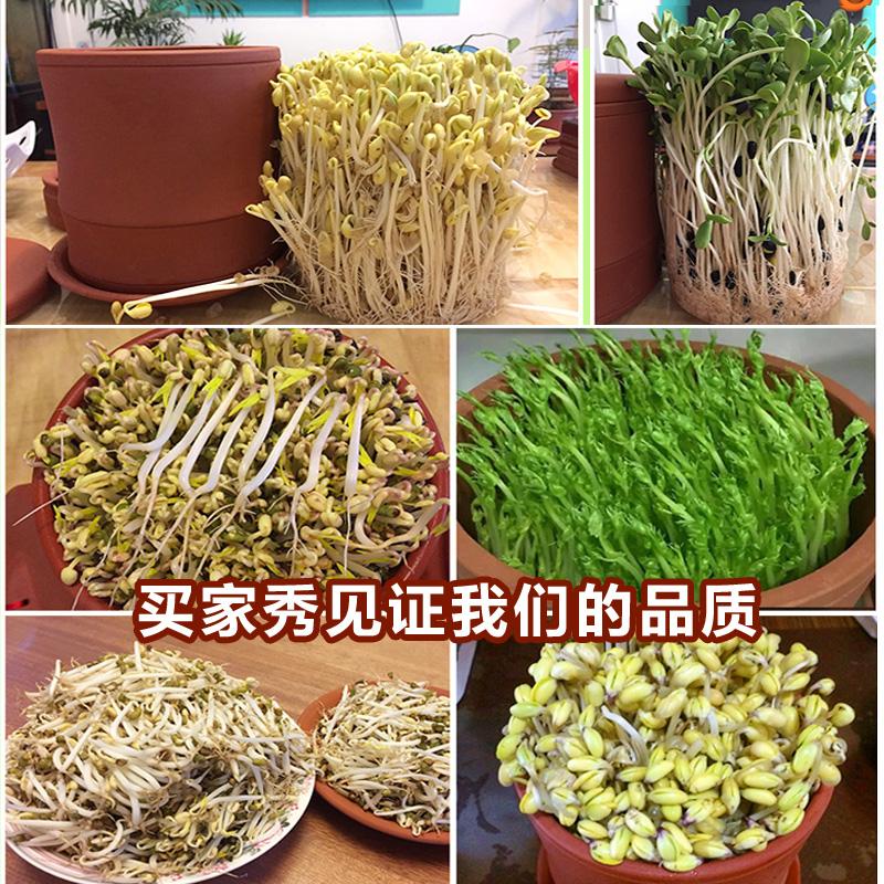豆芽罐家用生豆芽机土陶紫砂豆芽罐豆芽菜种植桶发绿豆芽芽菜