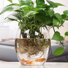 圆形玻璃鱼缸 客厅家用 圆形玻璃花瓶透明小鱼缸绿萝专用玻璃花瓶