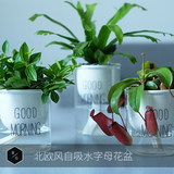 Nordic ins self-absorbent net red lazy flower pots desktop green plant glass water culture soil flower self-priming pot vase