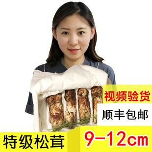 东北特产长白山野生松茸菇食用菌 2019新鲜松茸 中国 舌尖上