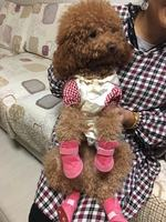 Puppy dog ​​shoes autumn and winter small dogs can not afford dog cotton shoes set of 4 winter snow boots Teddy pet shoes