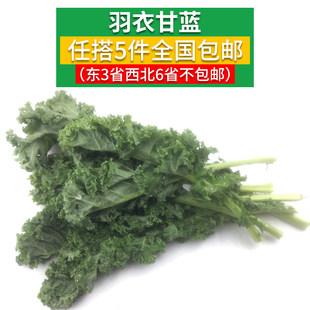 【蔬果超市满58包邮】新鲜蔬菜羽衣甘蓝叶杜丹绿叶花包菜Kale 1斤