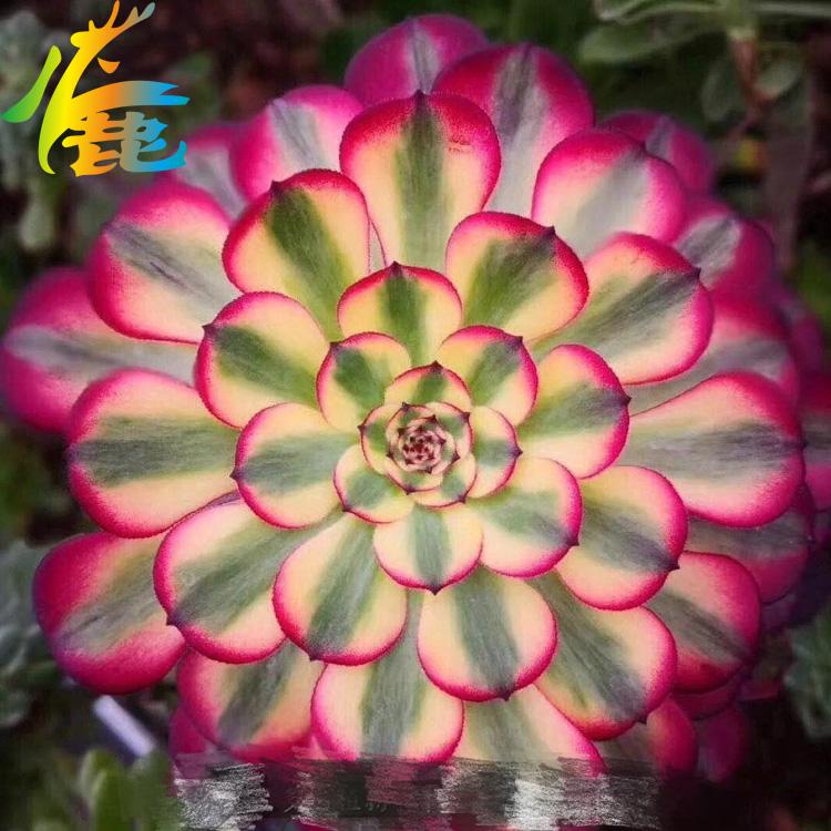 Книги о садоводстве Артикул 591634507399