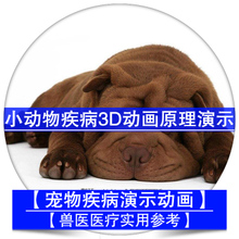 Small animal surgery pet medical cat dog bone disease surgery case 3D animation principle demonstration eye teeth elbow