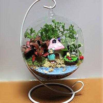 苔藓微景观生态瓶创意盆栽苔藓玻璃盆景绿植办公桌摆件迷你吊球