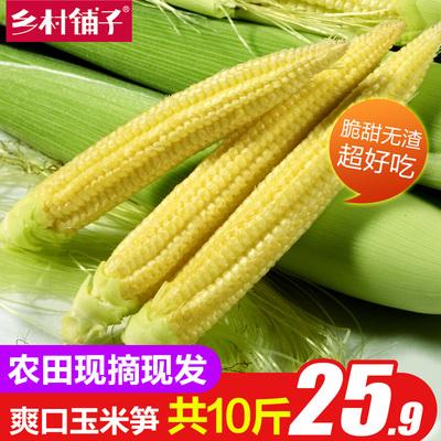 新鲜甜玉米笋 小玉米芯仔迷你嫩玉米棒农田种植非广西玉米棒