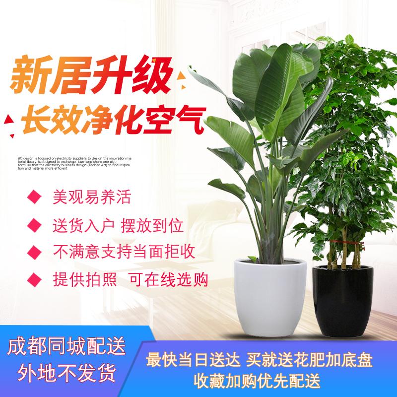 Комнатные растения Артикул 549068491716