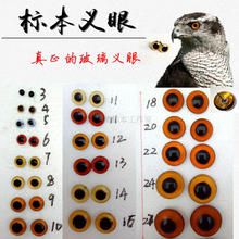 Bird specimens artificial eye animal simulation glass-eyed Eagle pheasant turtle dove specimens eye 3mm-40mm