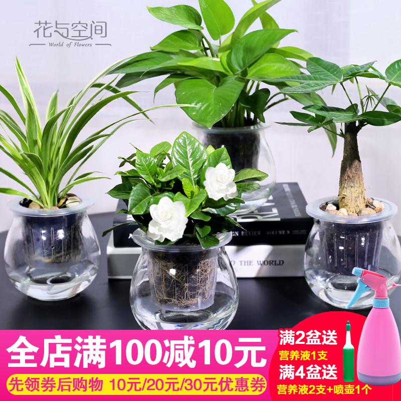 净化水培植物