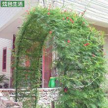 园艺玫瑰花架爬藤攀爬花架欧式铁艺室外爬藤支撑架