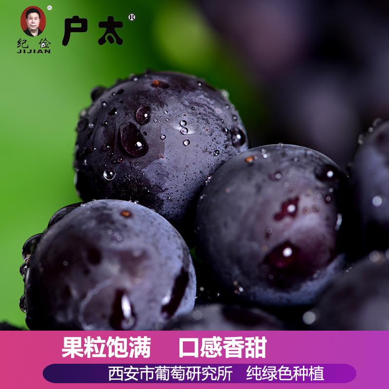 户太八号葡萄现摘现发新鲜水果甜西安同城三环内顺丰配送精品装