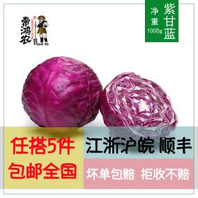 【5件包邮】紫甘蓝约1000g 紫包菜新鲜蔬菜过年不打烊