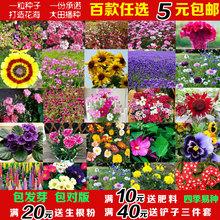 花卉种子蔬菜满天星葫芦碗莲向日葵薄荷室内盆栽庭院四季播种易活