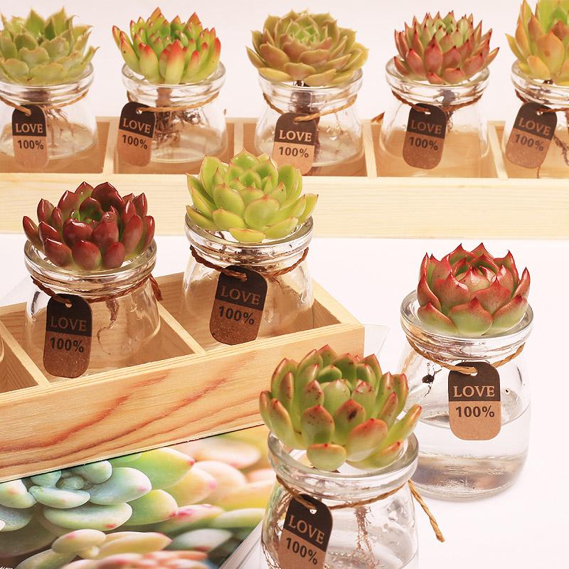 多肉植物玻璃器皿