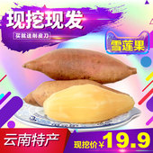 包邮 云南特产水果9斤天山雪莲果红泥沙新鲜水果批发