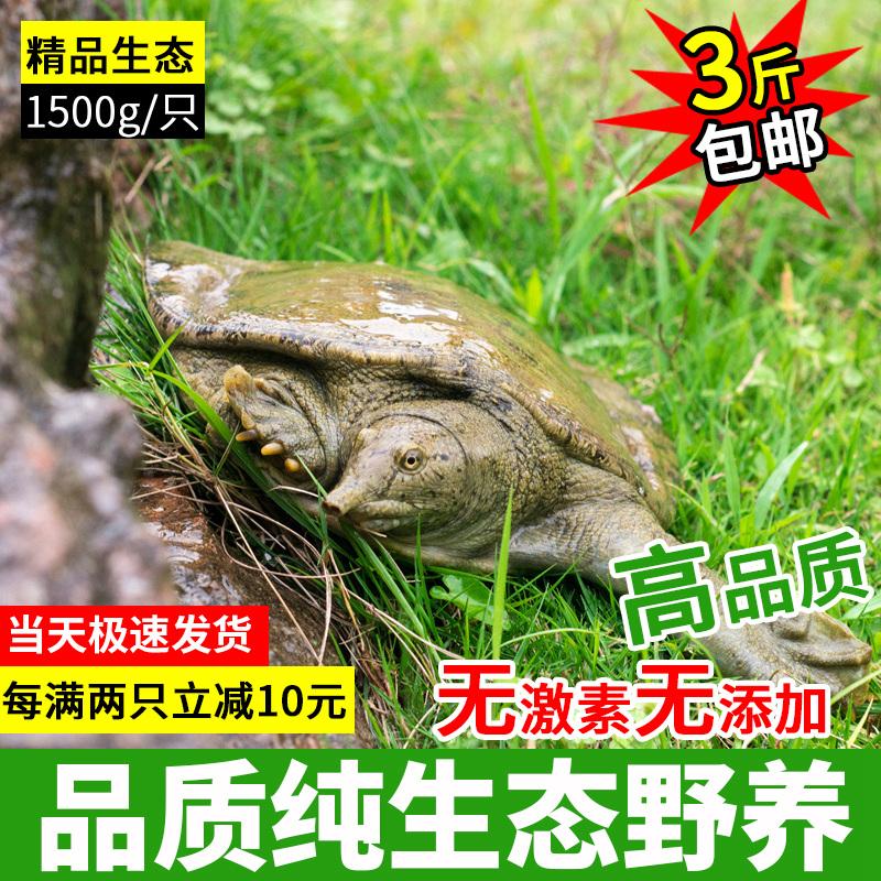 3斤甲鱼活体生态鳖野养老鳖团鱼水鱼王八